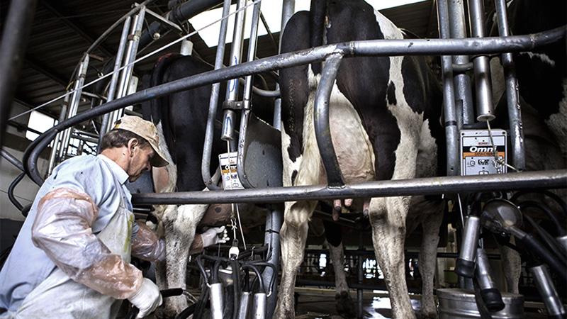 Derribando mitos: La producción lechera no caerá. Gustavo Traverso